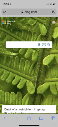 come eseguire una ricerca inversa di immagini in Android ios bing1
