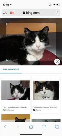 come eseguire una ricerca inversa di immagini in Android ios bing8